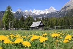 pomlad 2011 192